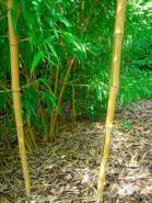 Bambus - Tropisches Flair das ganze Jahr